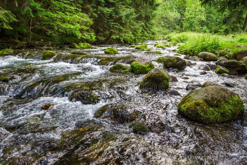 Mountain stream flowing between mossy stones stock image