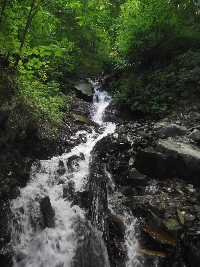 Mountain stream flows down. The valley in mountain forest royalty free stock photography