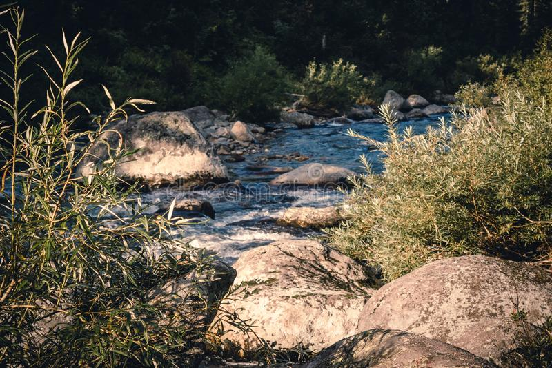 Mountain stream in the forest. royalty free stock image