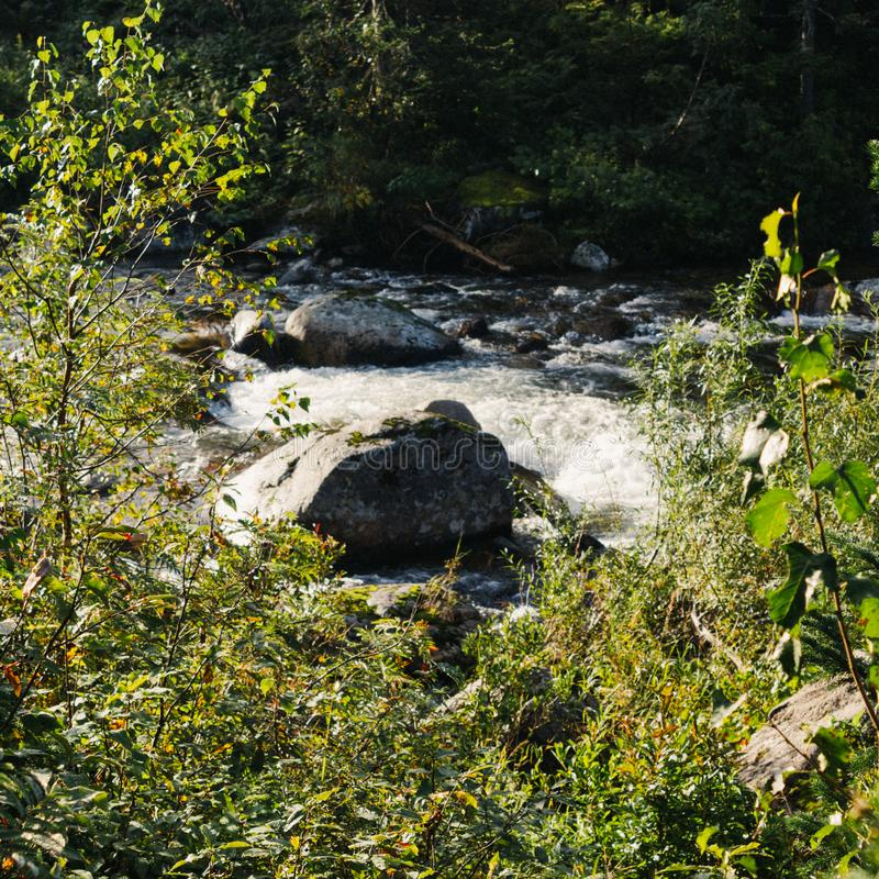 Mountain stream in the forest. stock image
