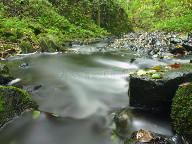 Download Mountain Stream In Fresh Green Leaves Forest After Rainy Day. Royalty Free Stock Images - Image: 34994109