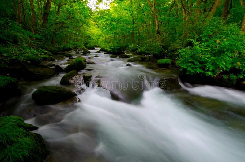 Download Mountain stream in japan stock photo. Image of water - 26476726