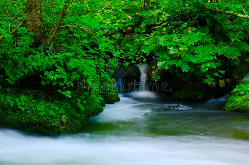 Download Mountain Stream In Japan Stock Images - Image: 26476804