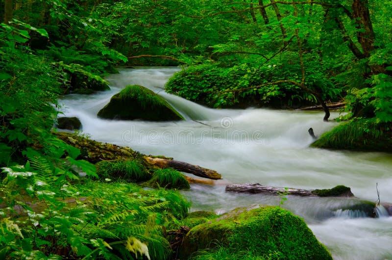 Mountain stream in japan