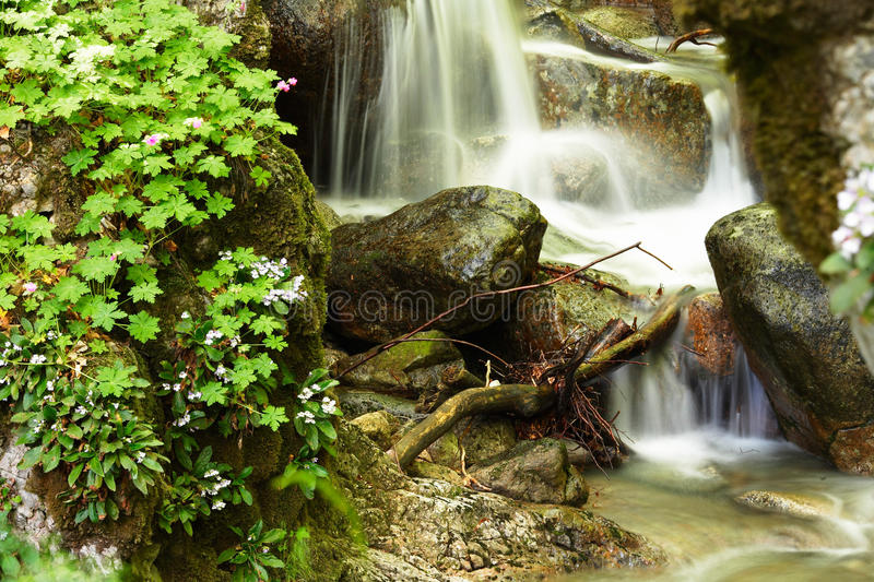 Download Mountain Stream And Spring Forest Flowers Stock Image - Image: 10107365