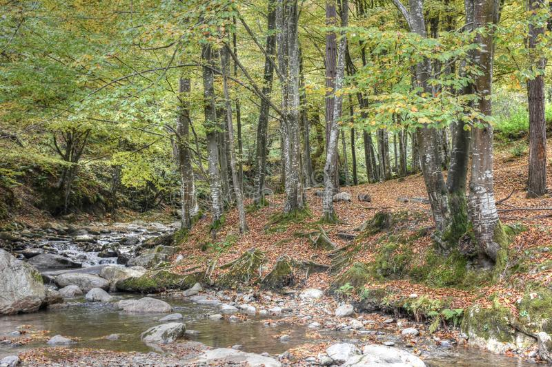 Mountain stream through the forest royalty free stock photography