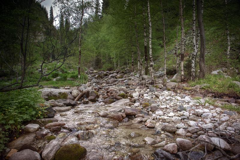Mountain stream in the spring. royalty free stock photo