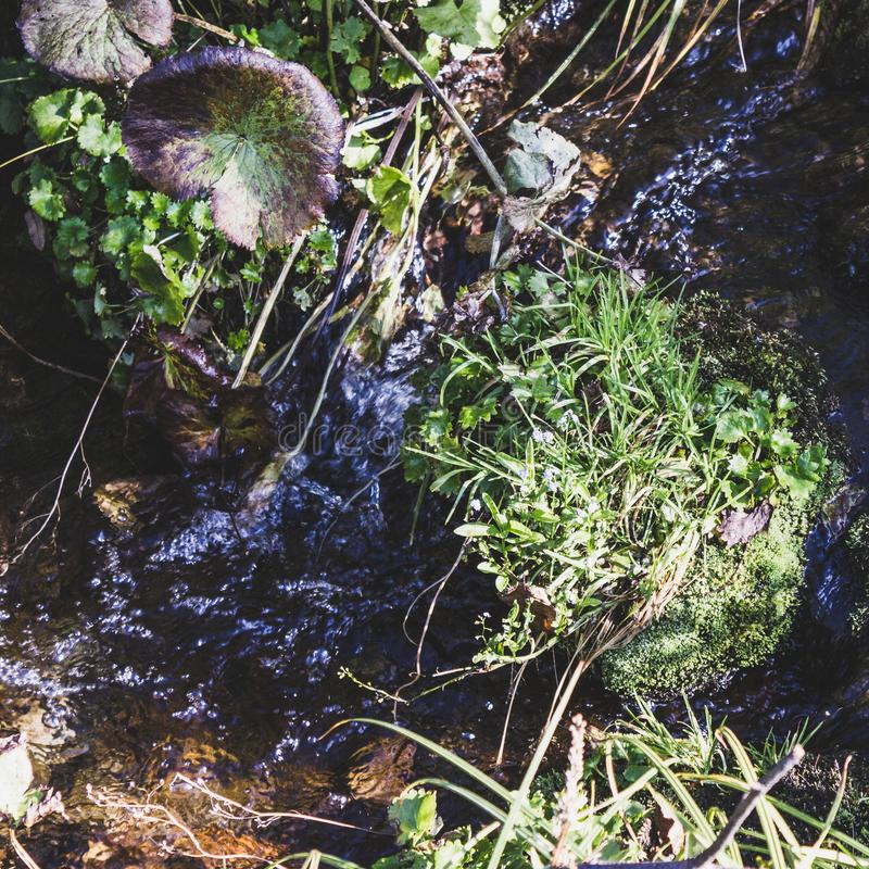 Mountain stream, a spring in the rocks stock photography