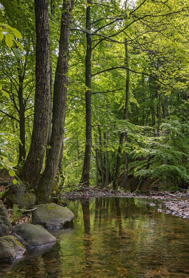 Mountain stream surrounded by alders. Ukraine - Transcarpathia stock photo