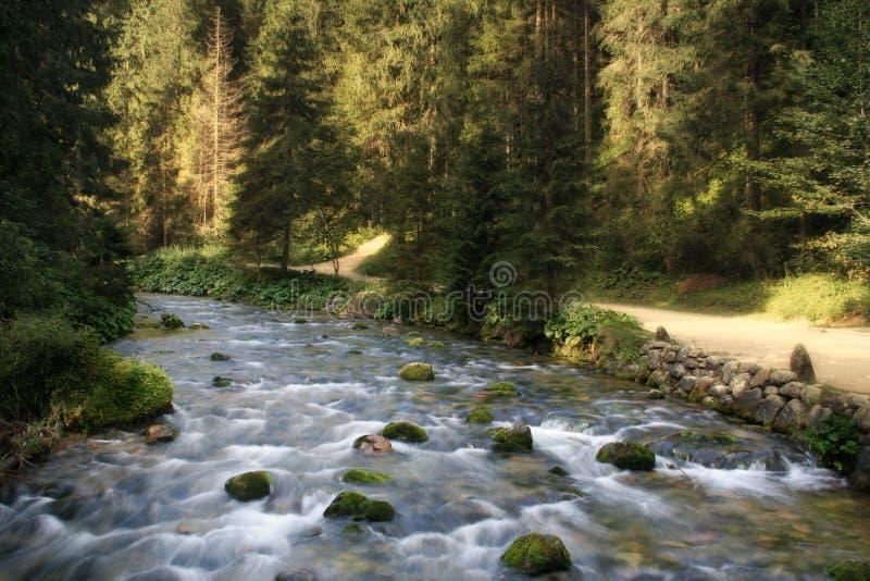 Mountain stream. In Tatra National Park near Zakopane. Poland stock image