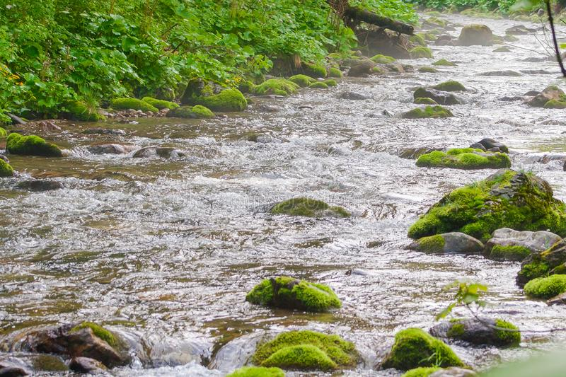 A mountain stream in the valley in the Tatra Mountains. In Poland royalty free stock images