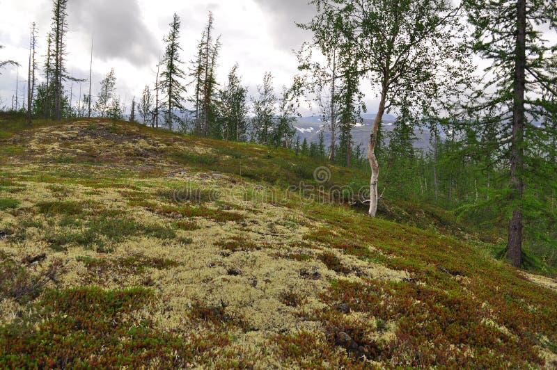 Mountain taiga Taimyr. royalty free stock photo