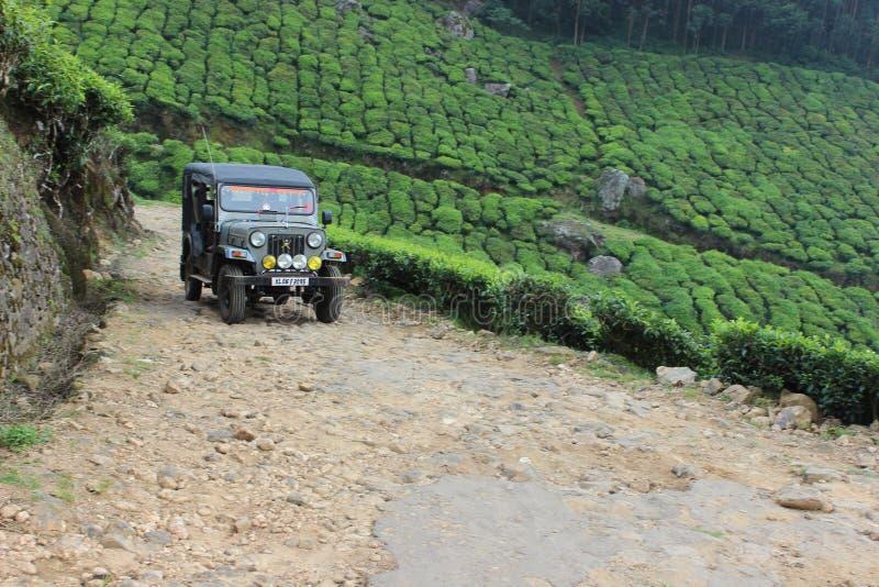 Mountain tea estate stock photography