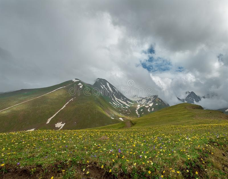 Mountain tops with the remains of snow with a wide green meadow with flowers. Landscape background stock image