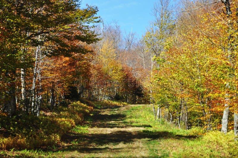 Mountain Trail in Vermont, New England, USA. Mountain Trail in fall on Mount Mansfield in Vermont, USA royalty free stock photos
