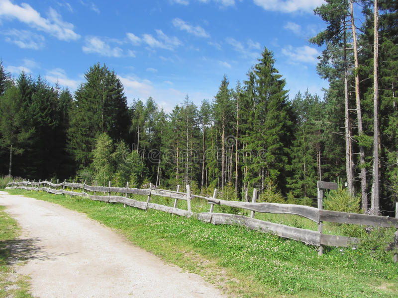 Mountain trail with wooden fence foreground and forest with sky in background. Fie allo Sciliar, South Tyrol, Italy.  royalty free stock photography