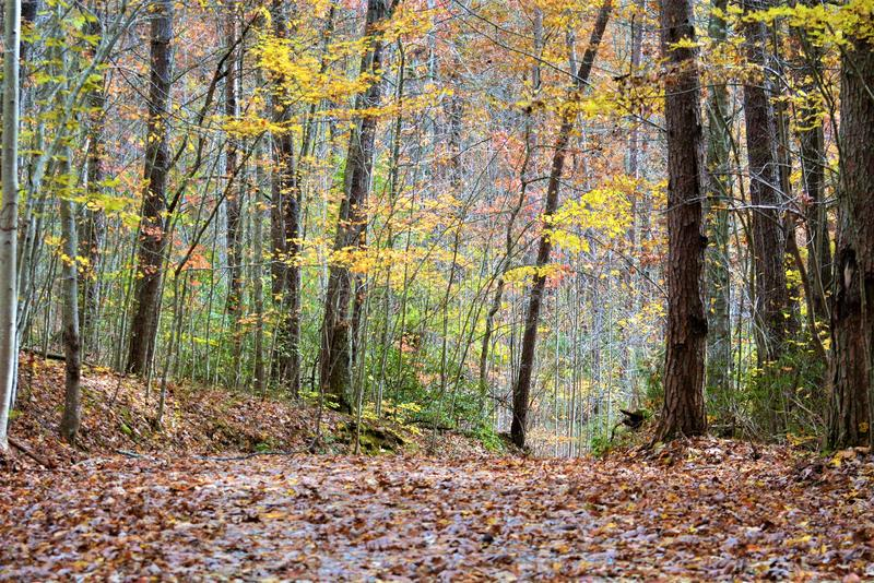 The deep woods in the fall season cover the trail in colorful leaves stock photos
