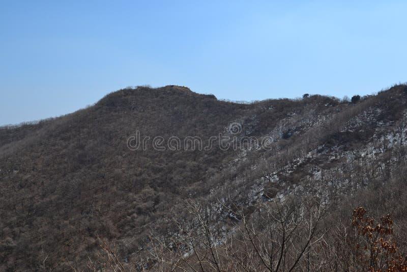 Mountain. Tree royalty free stock photo