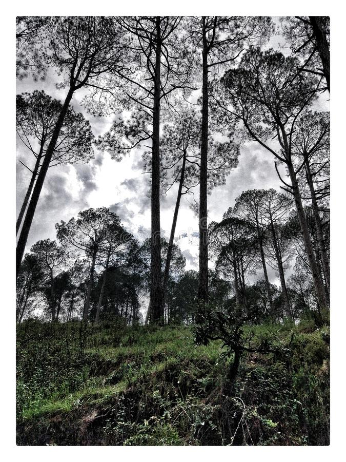 Mountain Trees and a Cloudy Day stock photography