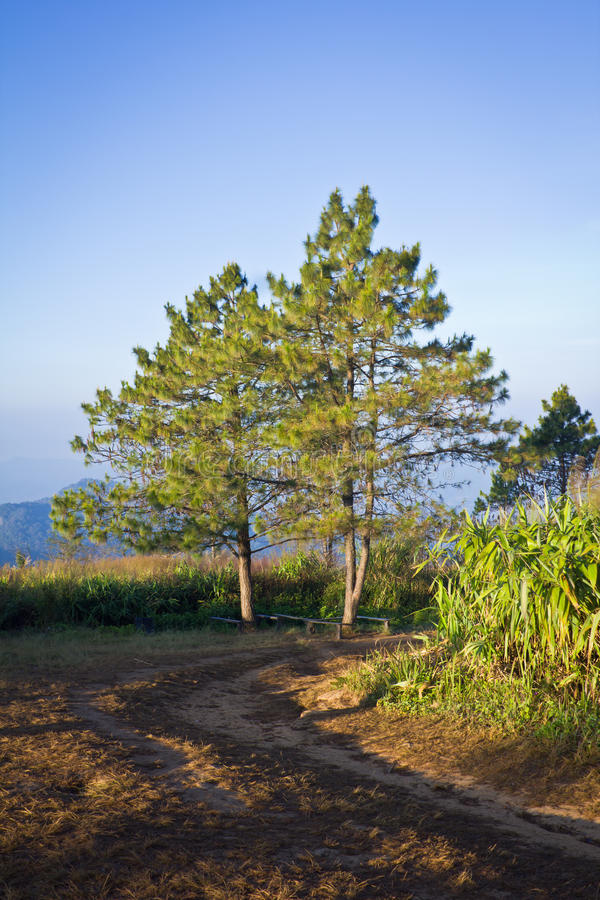Download Mountain and trees stock image. Image of mountainous - 39508023