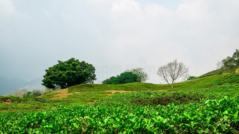 Mountain with tress and grass landscape. In a foggy background and cloudy skies landscape royalty free stock images