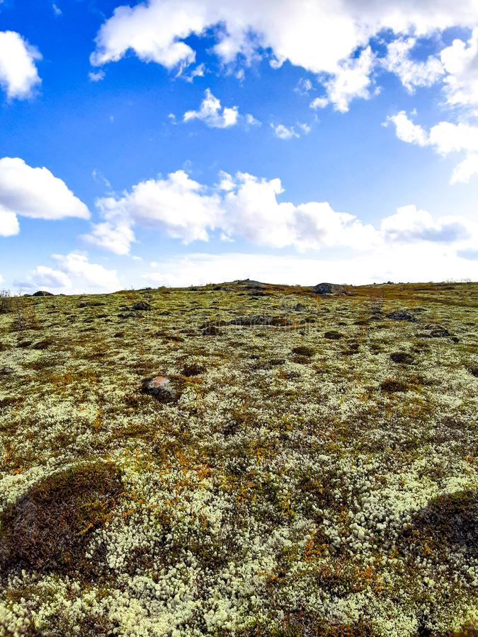 A mountain in the tundra in northwestern Russia, covered with white moss, like snow. stock photography