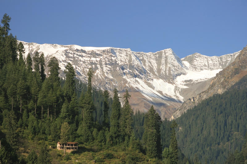 The mountain valley covered pine forest. Kullu. Himachal Pradesh, India royalty free stock photo