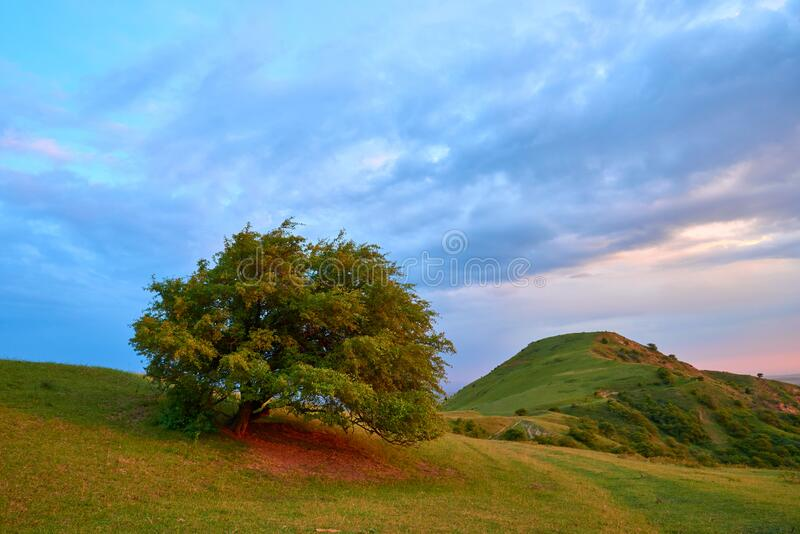 Mountain valley with green trees in Turkestan region, Kazakhstan, Central Asia. stock images