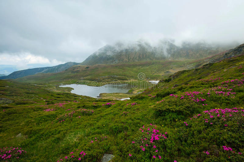 Mountain valley with lake and rhododendron flowers , cloudy mountain landscape stock image