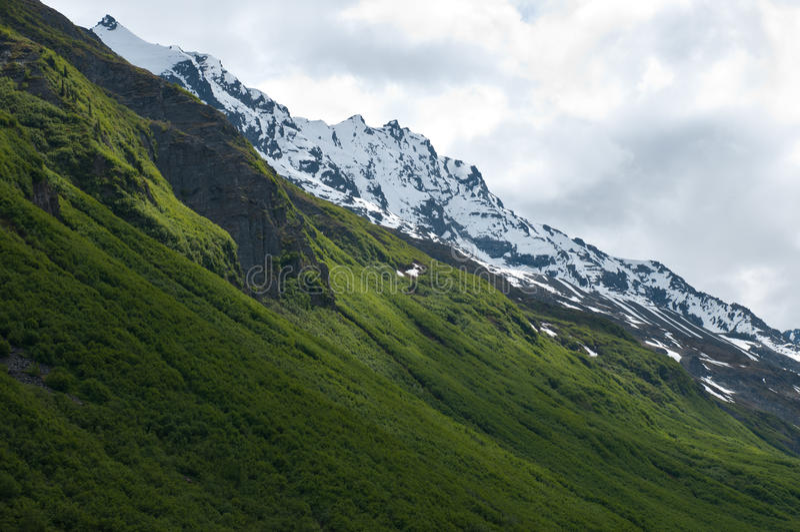 Download Mountain vegetation stock photo. Image of alaska, vegetation - 19968698