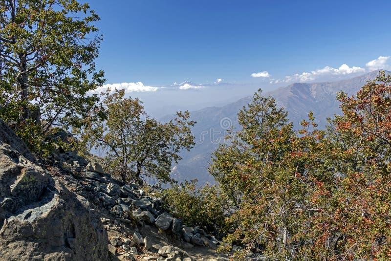 Mountain View Andes e vegeta??o de Aconcagua no dia claro no parque de Campana National do La no Chile central imagens de stock