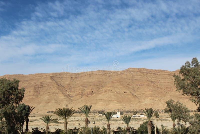 Mountain View avec l'arbre dans le désert photographie stock libre de droits