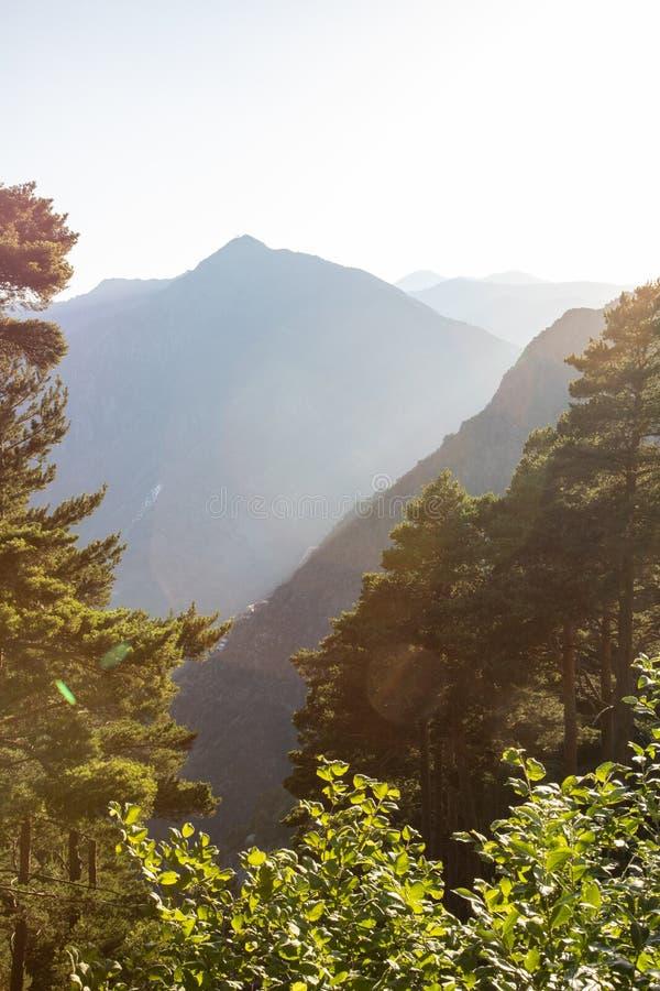 Mountain View bei Sonnenuntergang Kiefernwald stockfotografie