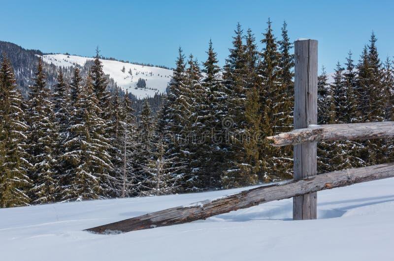 Mountain View carpatico pittoresco di giorno soleggiato di inverno, Ucraina immagini stock