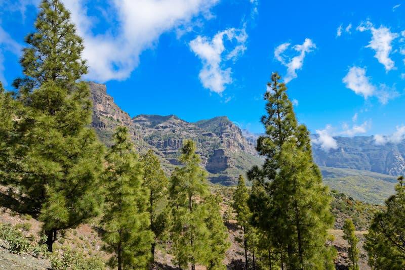 Mountain View com as árvores em Gran Canaria imagem de stock