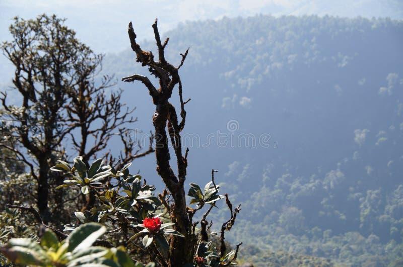 Mountain View cor-de-rosa de Intanon em Chiang Mai foto de stock royalty free
