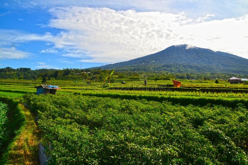 Mountain View de matin des gisements de piments dans le village photos stock