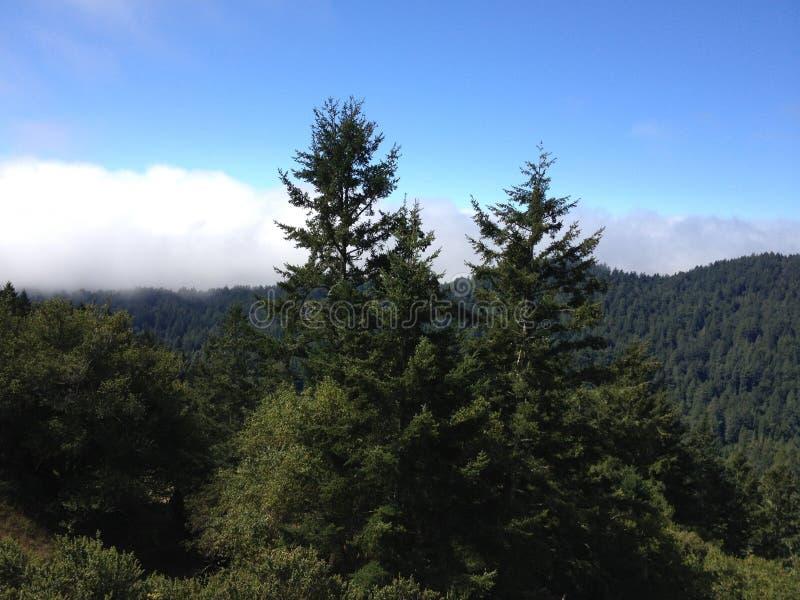 Mountain View de mountian coberto em árvores arborizadas imagens de stock