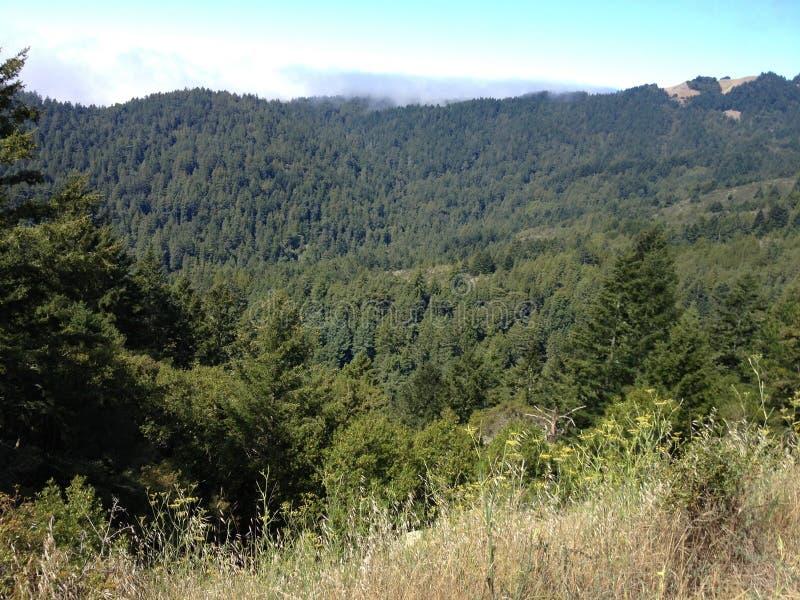 Mountain View de mountian coberto em árvores arborizadas imagem de stock