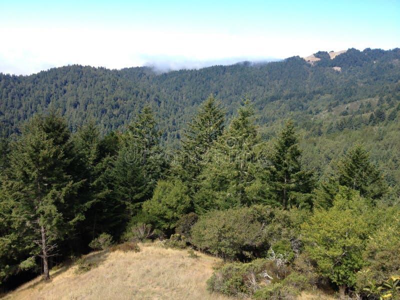 Mountain View de mountian coberto em árvores arborizadas imagem de stock royalty free