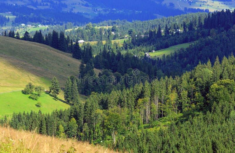 Mountain View di estate (carpatico, Ucraina) fotografia stock libera da diritti