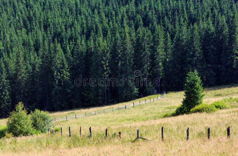 Mountain View di estate (carpatico, Ucraina) fotografie stock libere da diritti