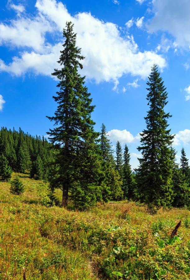 Mountain View di Ihrovets di estate (carpatico, Ucraina) fotografia stock libera da diritti