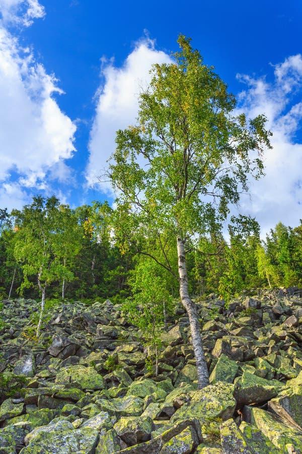 Mountain View di Ihrovets di estate (carpatico, Ucraina) immagini stock
