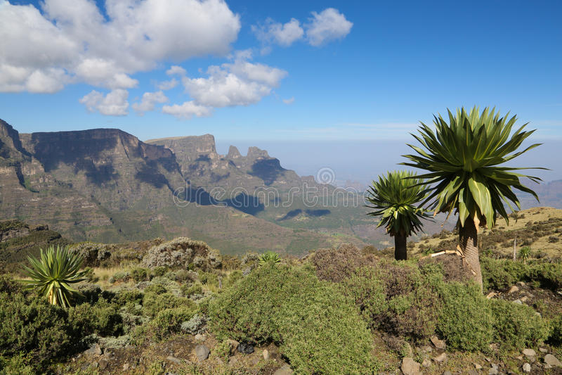 Mountain View di Semien con Lobelia gigante & x28; Rhynchopetalum di Lobelia fotografie stock