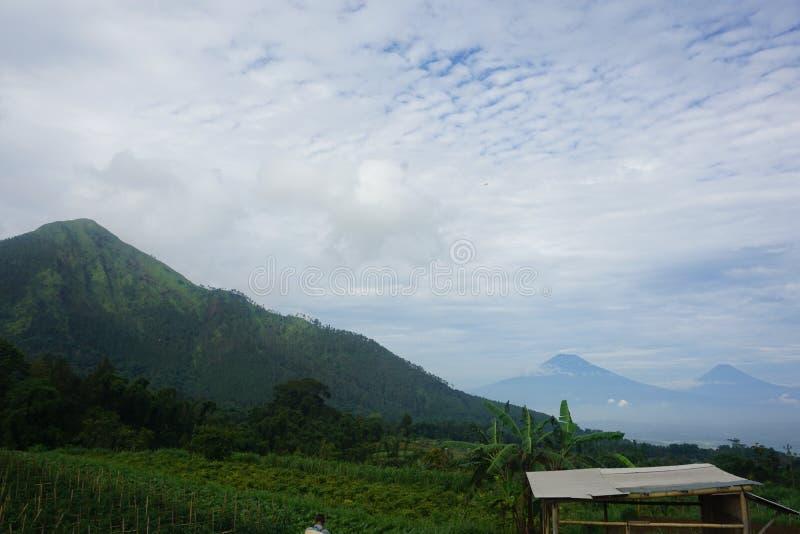 Mountain View et jardins de tomate photographie stock