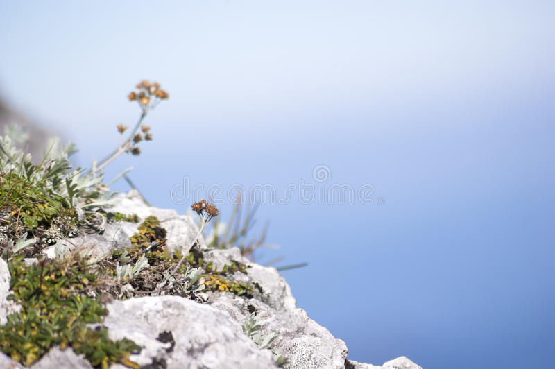 Mountain view. Flowers at a rock at Untersberg, Austria royalty free stock photos