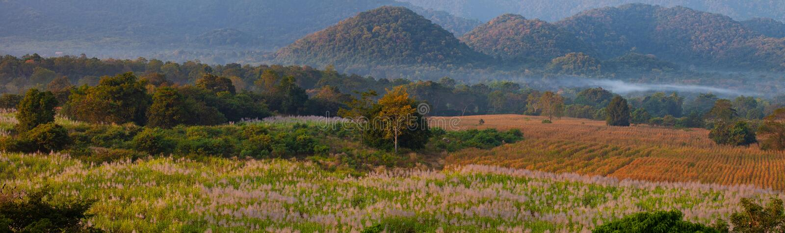 Mountain view of Khaoyai National Park, Thailand, with sugar cane and corn field plantation in the morning. Mountain view of Khao yai National Park, Thailand stock photo