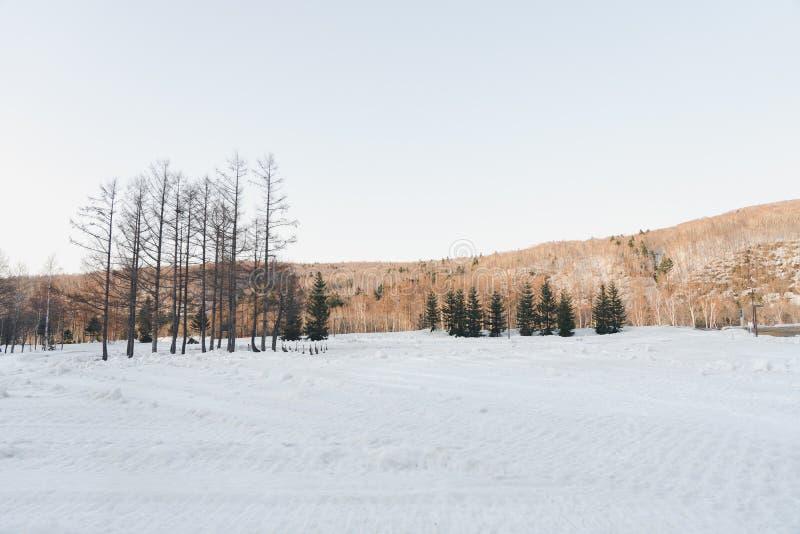 Mountain View no inverno com branco da tampa de neve a todas as áreas alinhadas com pinheiros para sentir frio fotografia de stock royalty free