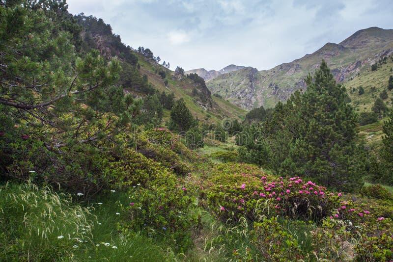 Mountain View Oxidado-con hojas de las flores de Alpenrose imágenes de archivo libres de regalías